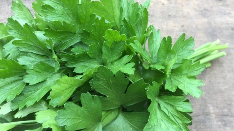Persil : une herbe culinaire discrète