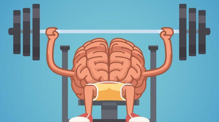 Quel est l'impact de l'entraînementcérébral sur le cerveau ?