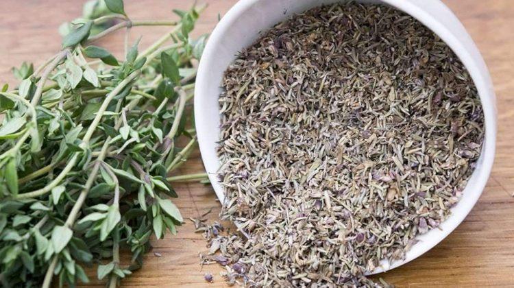 Thym : une herbe aromatique intemporelle