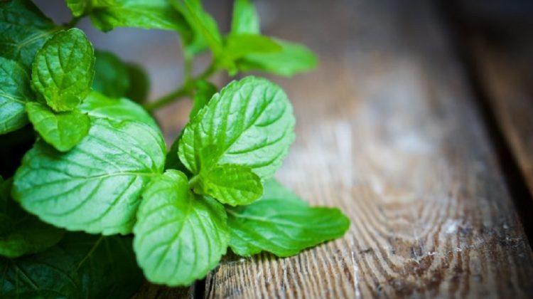 Utilisations possibles de l'huile de menthe poivrée