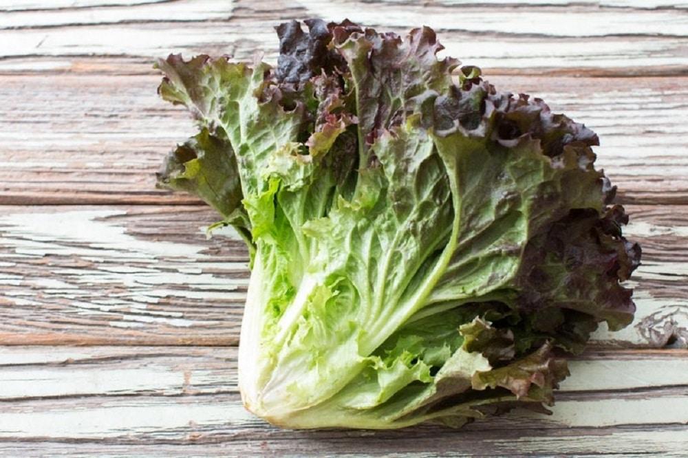 Bienfaits de la laitue frisée rouge sur la santé (+ valeur nutritive)