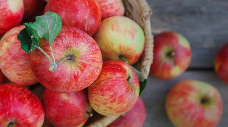 Bienfaits des pommes sur la santé (+ valeur nutritive)