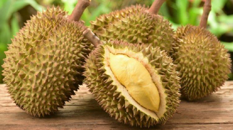 Bienfaits du durian sur la santé (+ valeur nutritive)