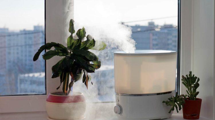 Devriez-vous utiliser un humidificateur pour vos plantes d'intérieur ?