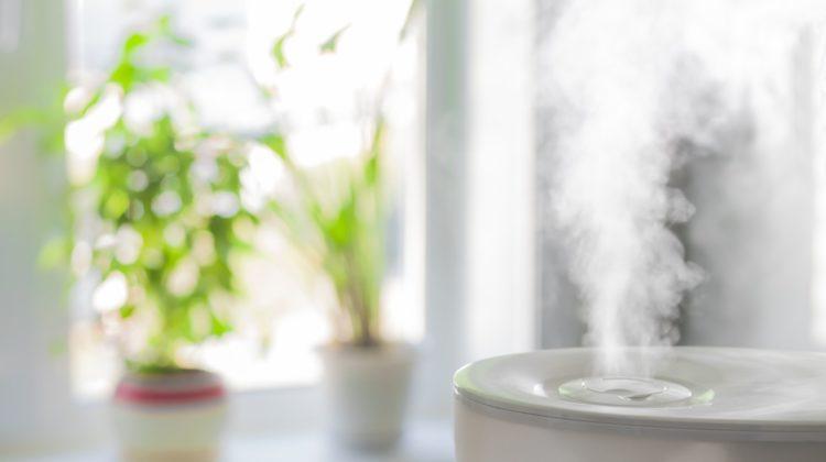 Les 3 meilleurs humidificateurs pour plantes d'intérieur