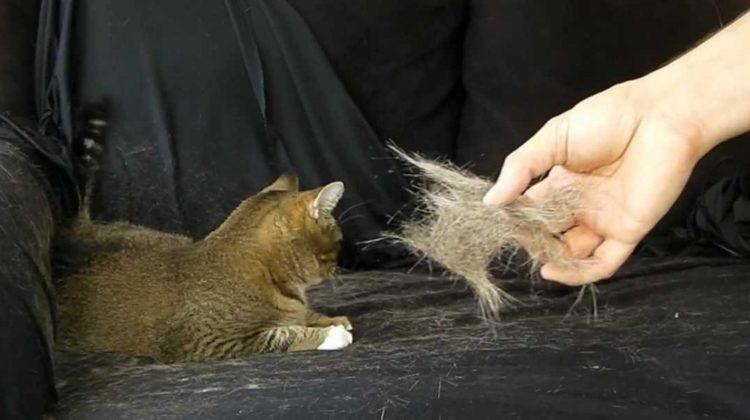 Les 3 meilleurs purificateurs d'air pour les poils d'animaux