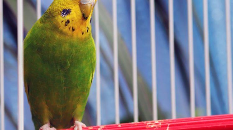 Les 3 meilleurs purificateurs d'air pour oiseaux