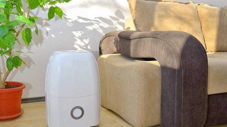 Les 5 meilleurs déshumidificateurs contre les allergies (moisissure et acariens)