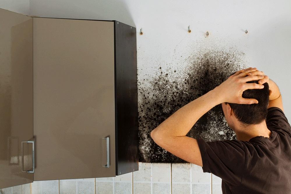 Les 5 meilleurs purificateurs d'air contre la moisissure
