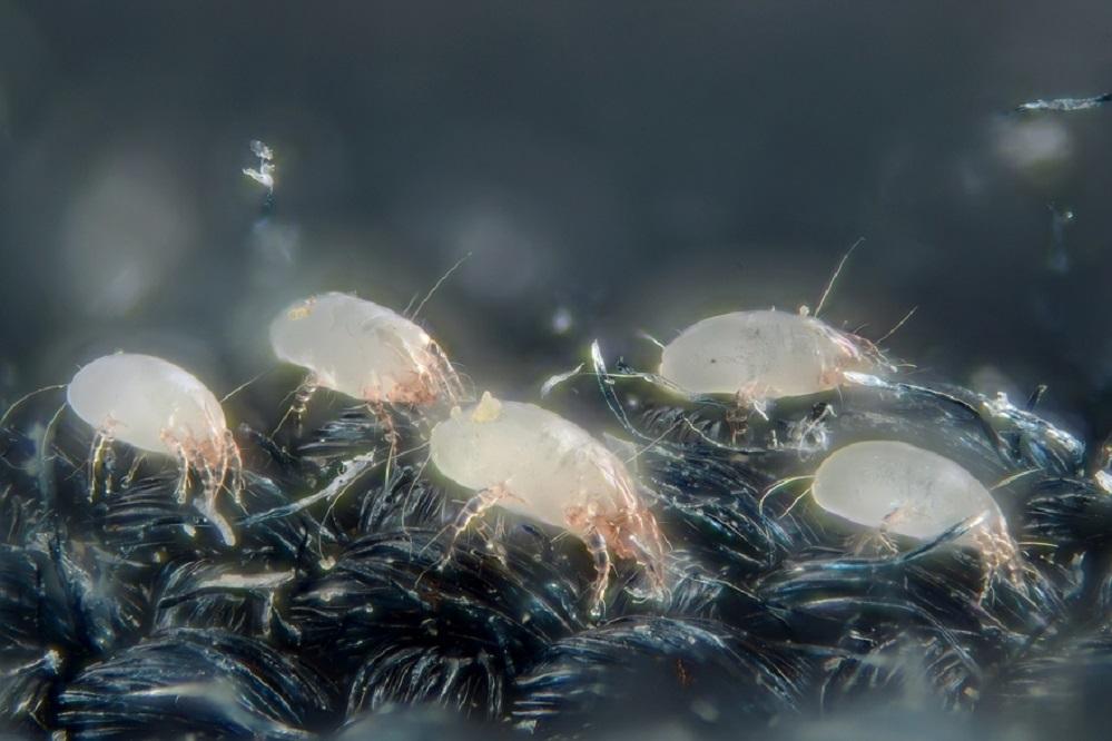 Les 5 meilleurs purificateurs d'air contre les acariens