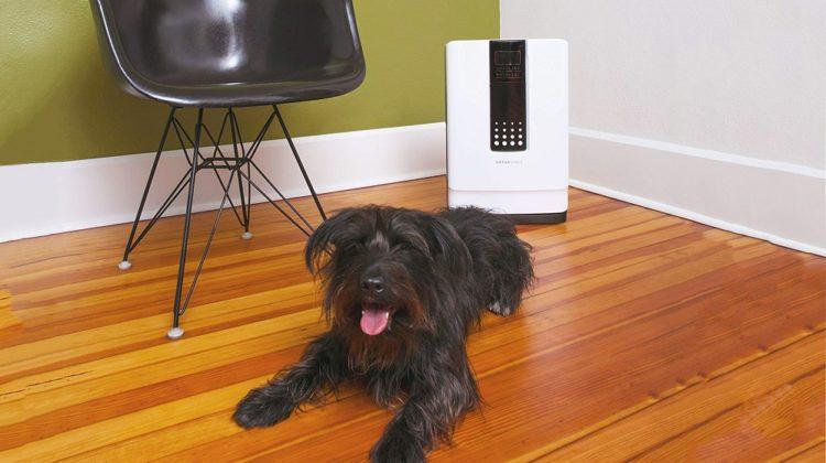 Les purificateurs d'air sont-ils efficaces contre les odeurs d'animaux ?