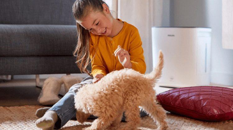 Un humidificateur est-il bénéfique pour votre animal de compagnie ?